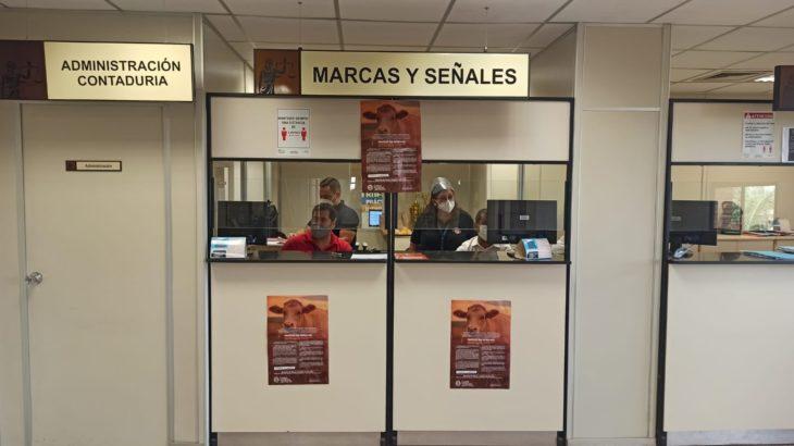 Jornadas de inscripción y reinscripción de ganado en Pedro Juan Caballero